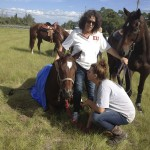 Jodie Alvarez (kneeling) and her mother Ellen Alvarez comfort Logan after he collapsed on a trail ride. Logan has on the Equi Cool Down wrap that Jodie said helped to save his life. (Image via Johnny Robb/Palm Beach Post)