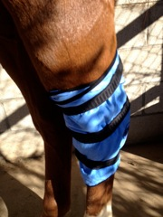 Pro Equine Grooms liked the leg wrap as a hock wrap, too!